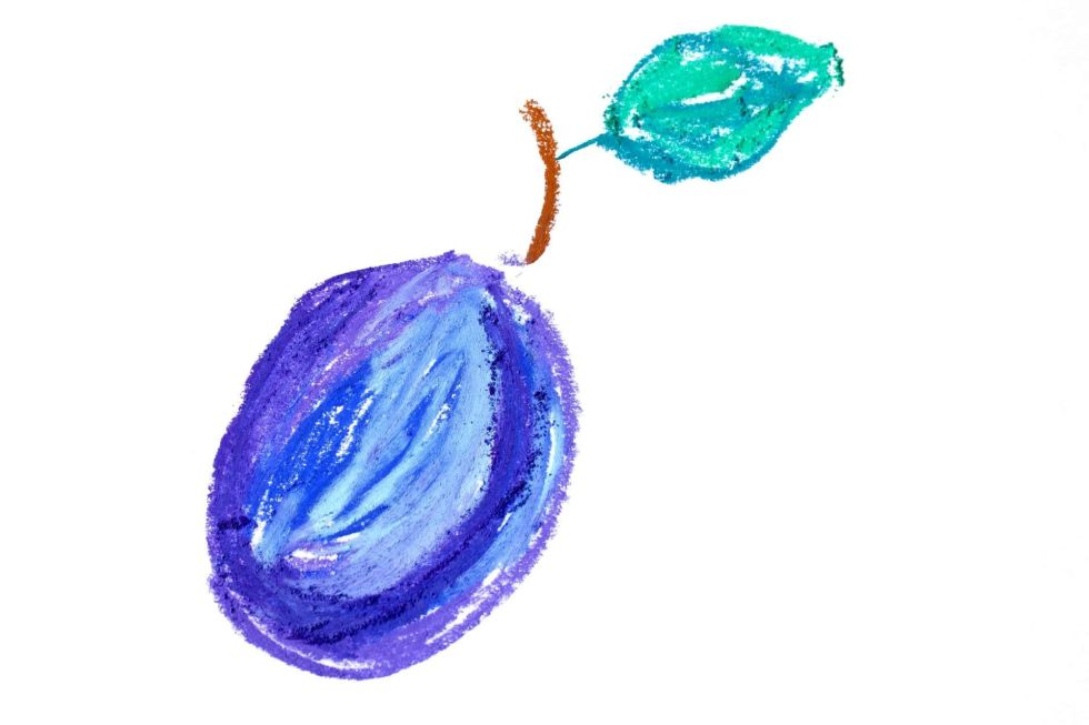 Plum with leaf drawing isolated on a white background