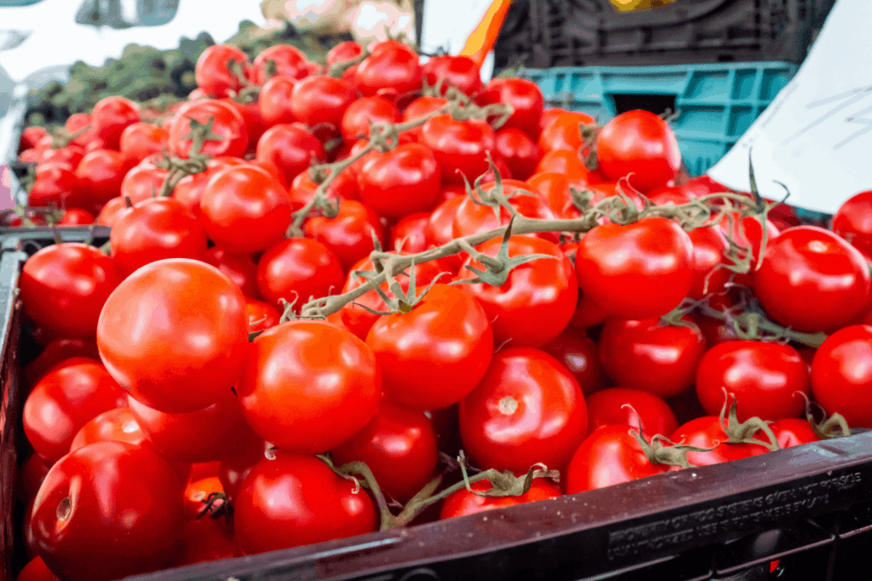 image of tomatoes being sold at a farmers market