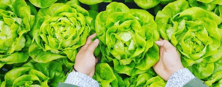 十字花科-高麗菜-花椰菜-胃癌
