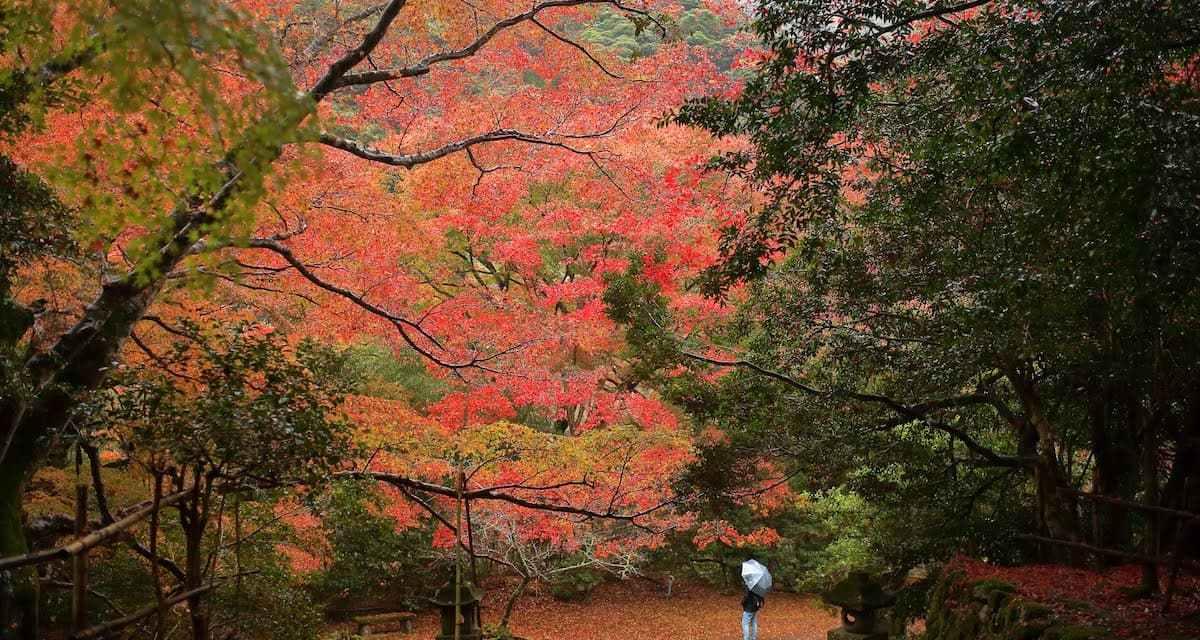 11 月可以去出雲鰐淵寺賞楓葉!只是…路有點難走