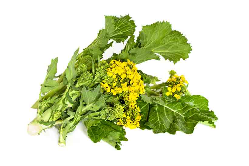 Pictures of Fresh Broccoli Rabe (Rapini) Leaves.
