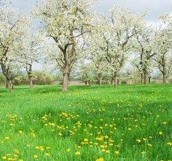 Environmental Allergy Testing