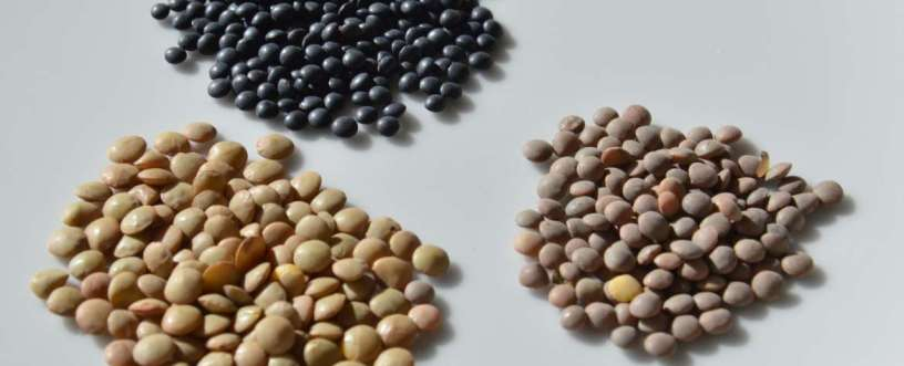 Lentils Explained: Nutrients, Health Benefits & How To Prepare