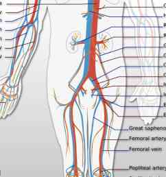 diagram lower back [ 1920 x 1080 Pixel ]