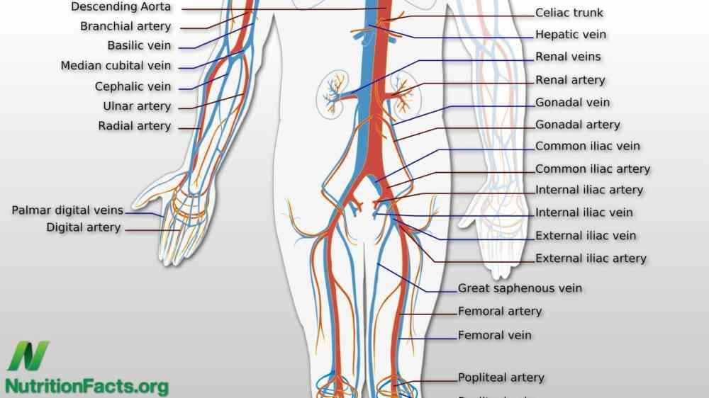 medium resolution of diagram lower back