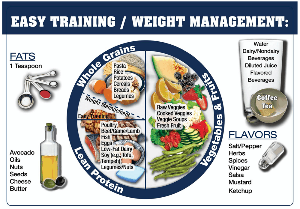 sample plate of foods for easy training day