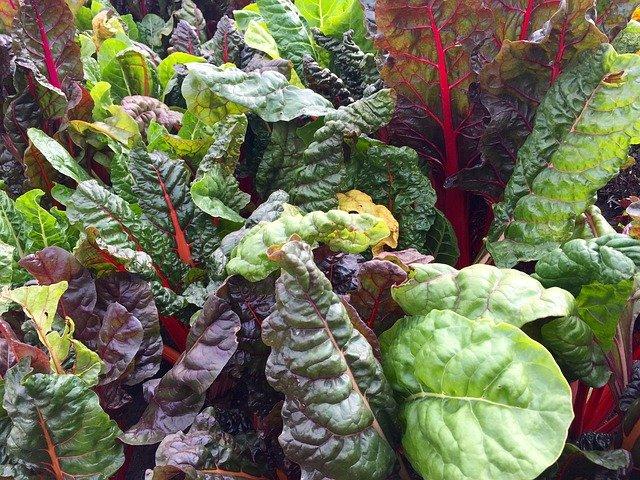 swiss-chard-leafy-greens