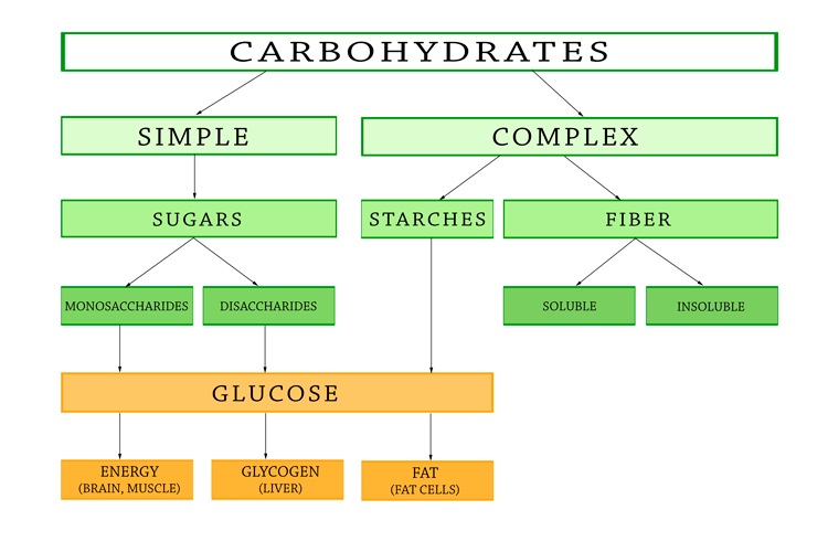 types-of-carbohydrates