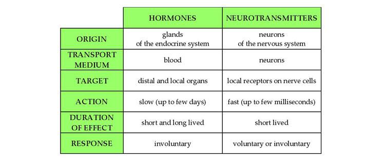 hormones-neurotransmitters