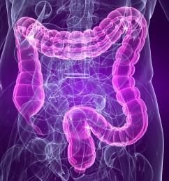 large intestine bowel diagram [ 1600 x 1200 Pixel ]