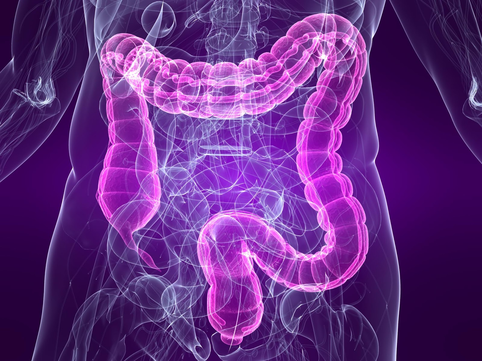 hight resolution of large intestine bowel diagram