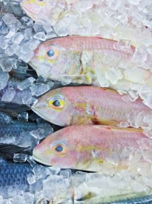 Fish and ice