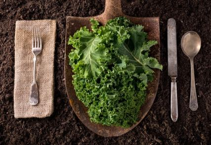 Kale on a shovel