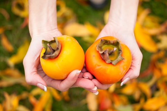 Hands holding persimmons