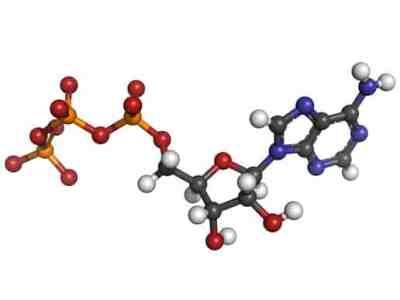 Adenosine triphosphate (ATP) energy transport molecule, chemical
