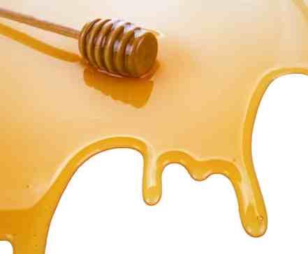 puddle of honey