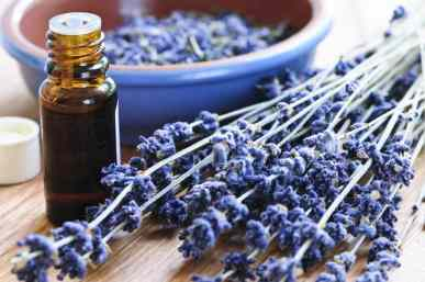 A Beginners Guide to Essential Oils