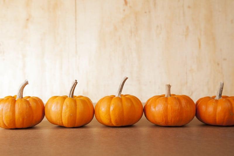 Line of pumpkins