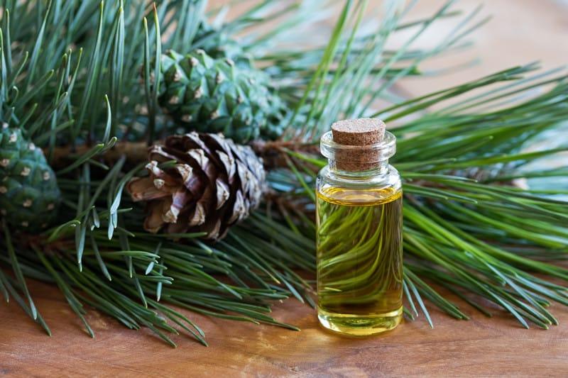 Pine essential oil