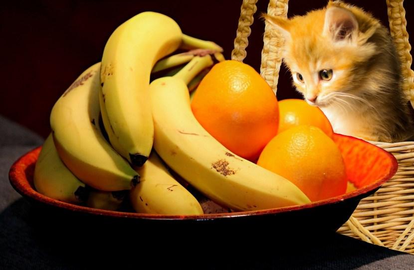 Fructe fibre