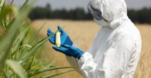 GMO-dangers-facts-you-need-to-know-480x250