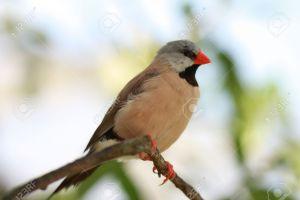 Do You Know this Bird?