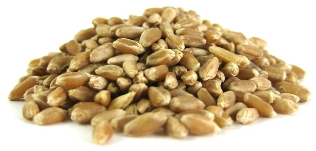 Organic Hard Spring Wheat Berries - 1 pound bag
