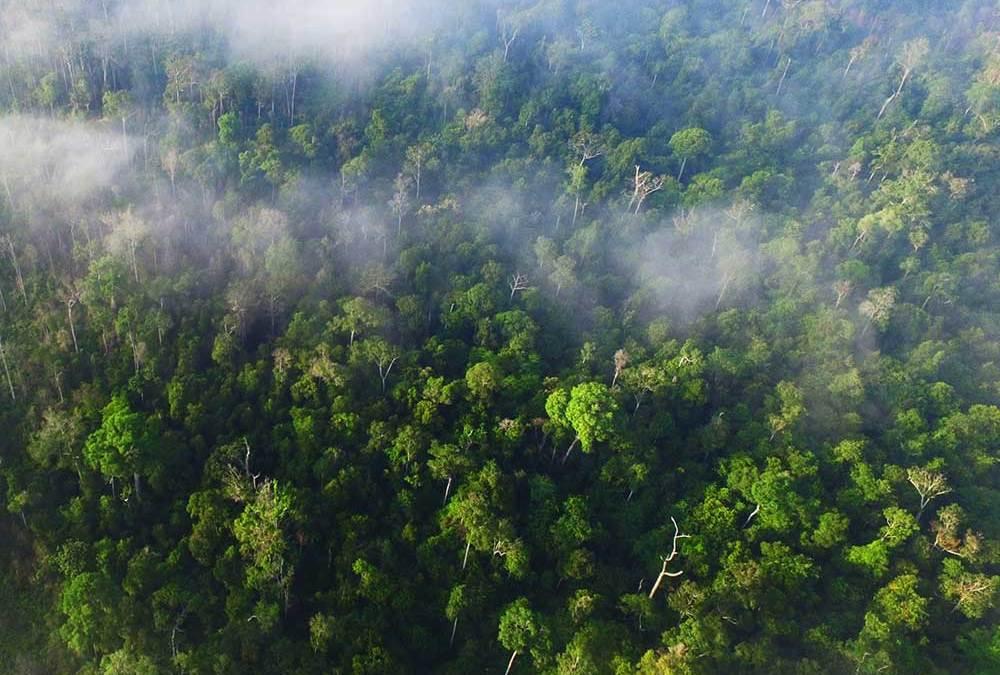 Protecting The Orangutan Legacy Forest Borneo