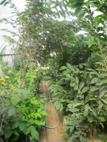 inside the greenhouse nursery