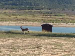 Hiking with deer on Sept 25 2014 at Dana Peak Park