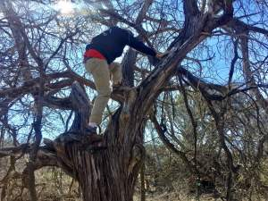 My husband climbing a tree to get a geocache.