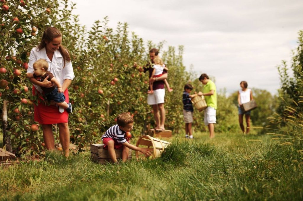 Sure, Gettysburg is known for the Civil War, but the countryside outside the historic town is known across the United States for its abundant apple orchards which complement the region's growing wine and hard cider industry as well as the many farm markets.