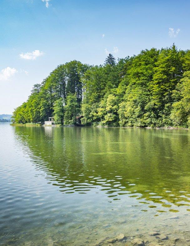 lac arbres