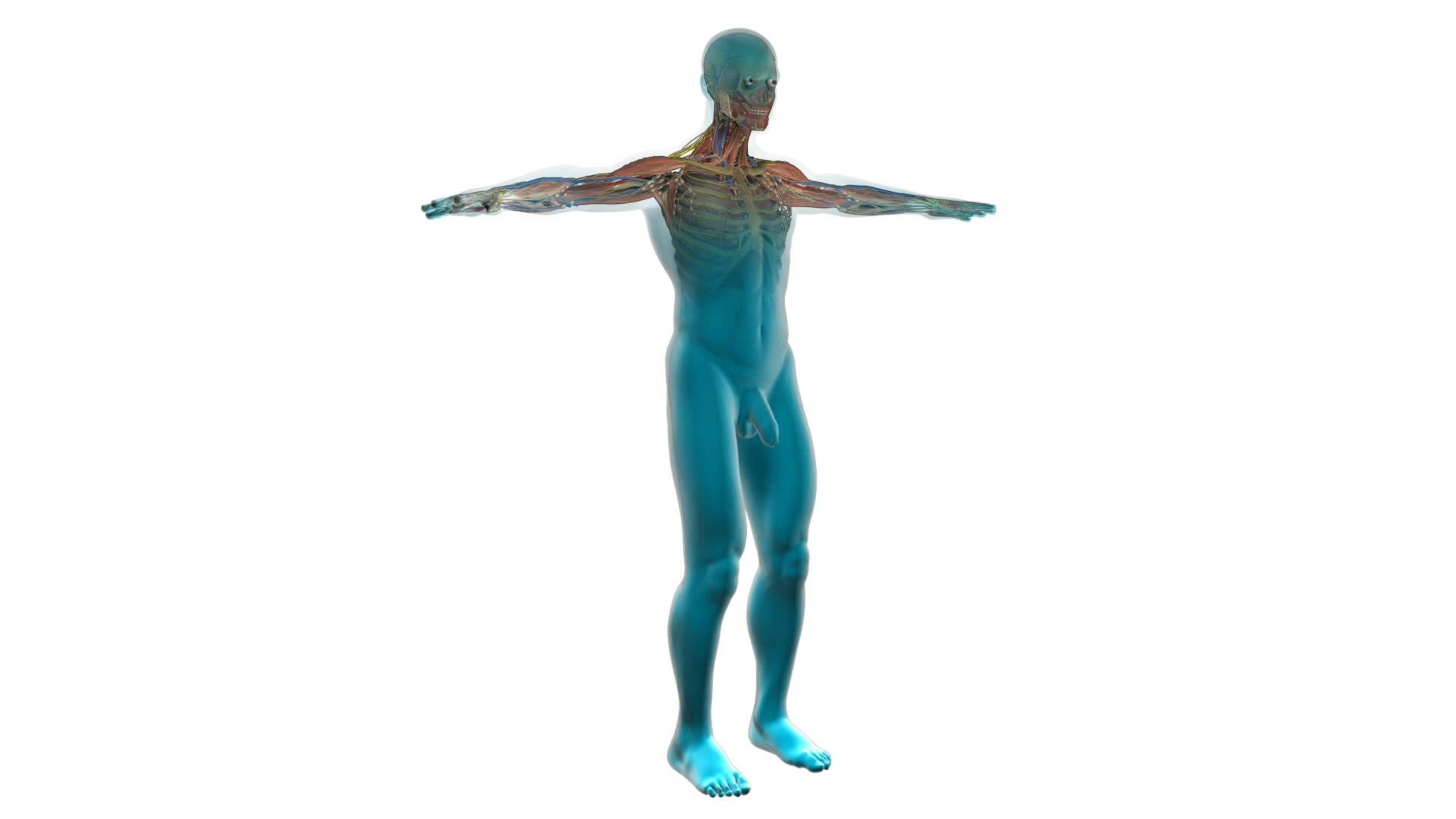 How Water Affects The Body