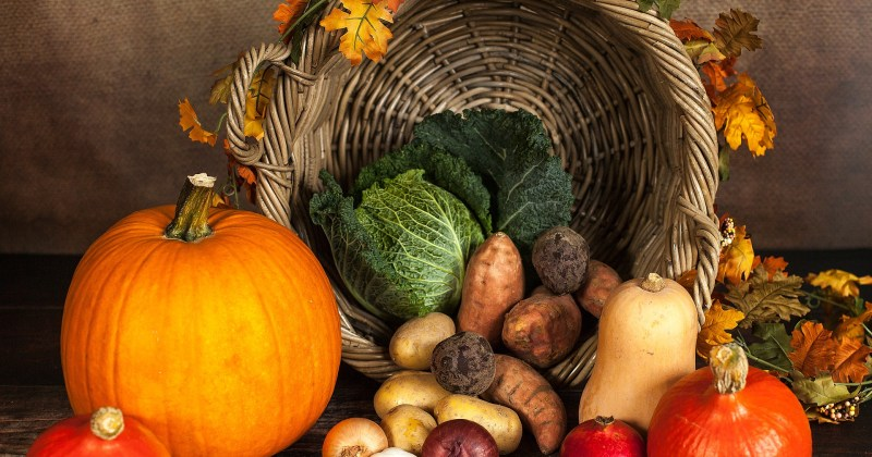 Autumnal harvest with pumpkins and gourds