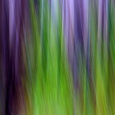 Winter Swamp by Sarah Skerker