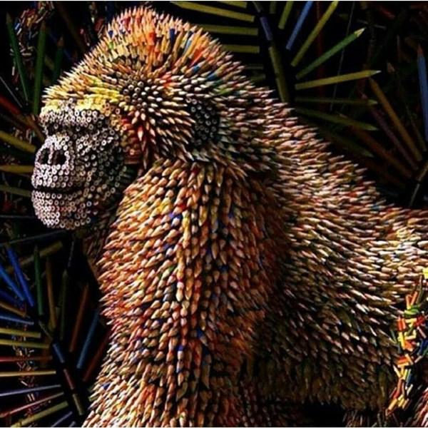 Gorilla Colored Pencils Ricardo Salamanca Nveam