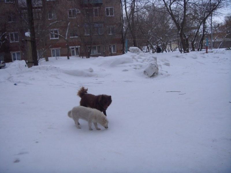 голодные псы на улицах Медногорска_810