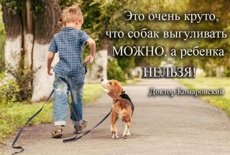 Выгуливать собак