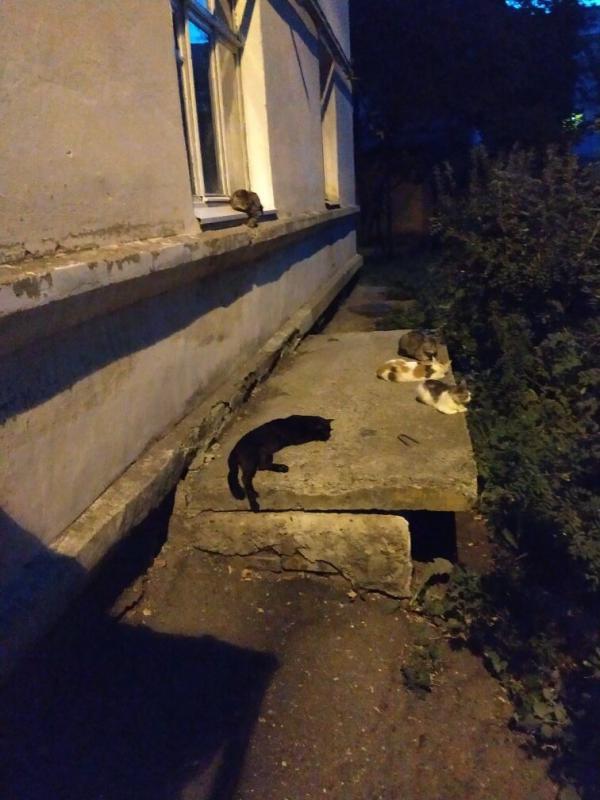 Кошки в Медногорске
