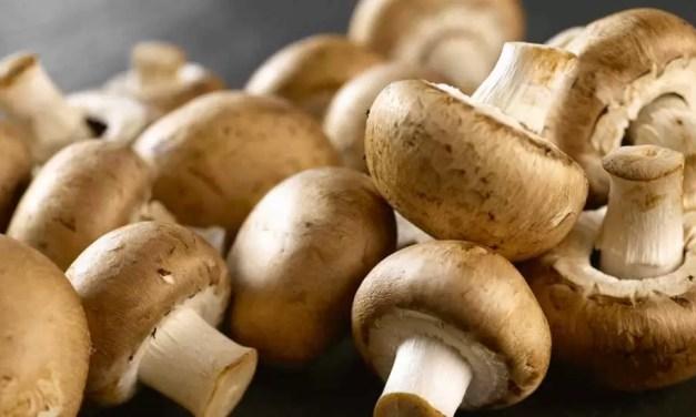 Malle gevallen: maggi en champignons
