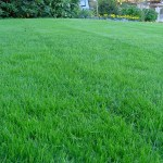 What Grass is Right For Upstate NY Lawns?