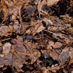 dead fall leaves for fall cleanup