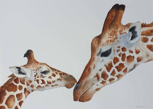 Aquarel of Giraffe pair mother and calf, endearing pose