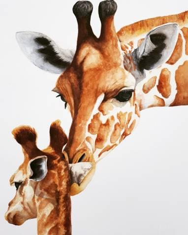LP_Giraffes