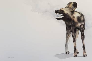 LP_Wild dog