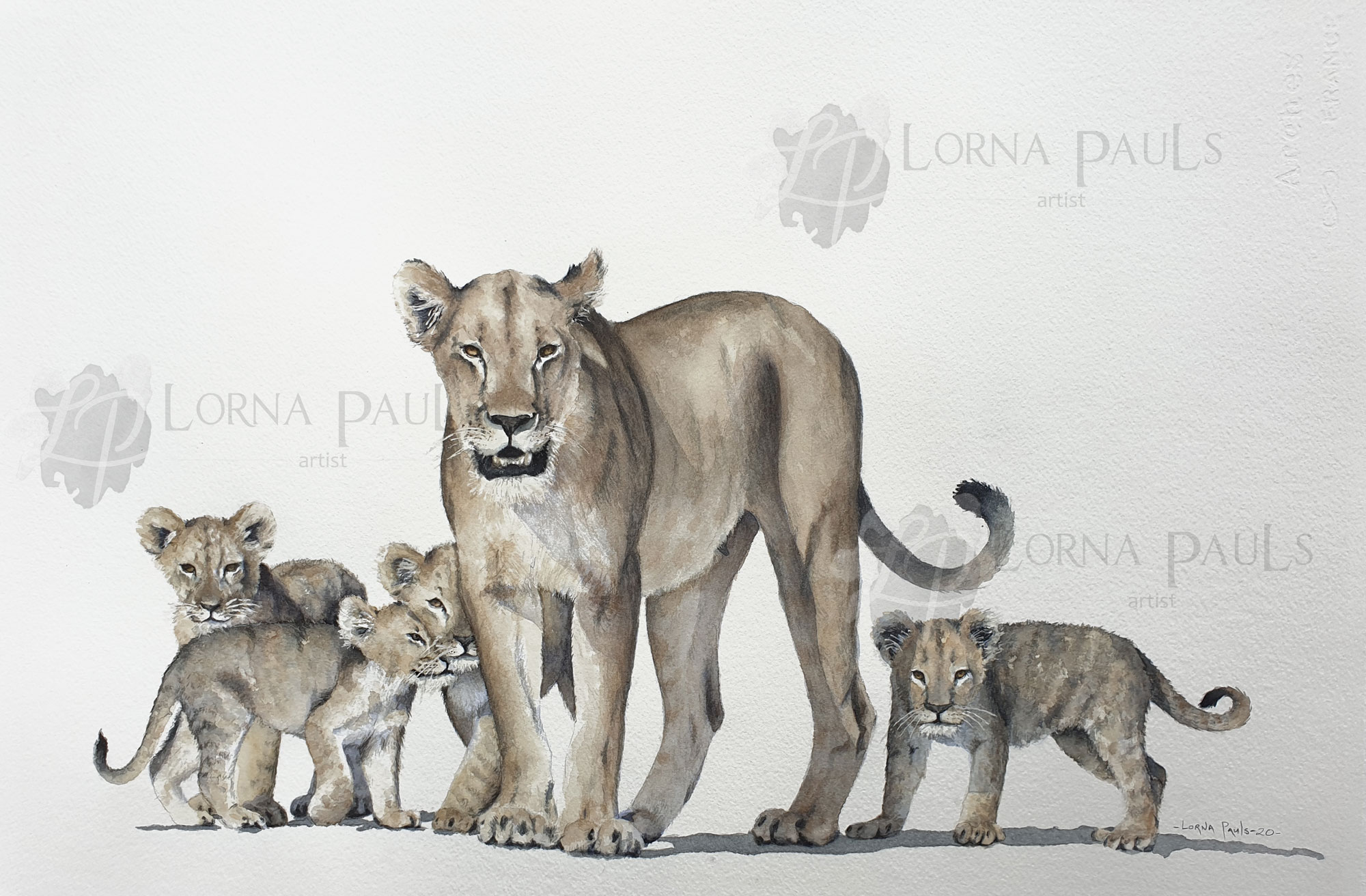 Lioness with cubs aquarel by Lorna Pauls completed painting