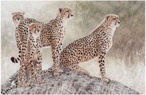 Hunting for hope by Danie Marais, painting of for cheetahs on a mount