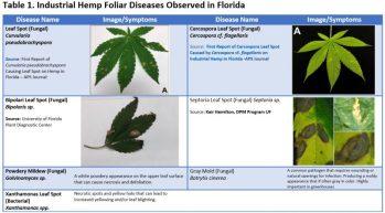 table 1 Hemp Foliar Diseases