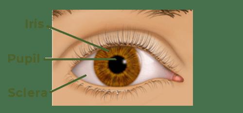 eye anatomy diagram of eye conditions